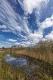 Diuny Kształtują teren W holandiach Zdjęcie Royalty Free