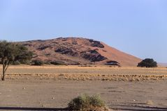 Diuny namib pustynia zdjęcia stock