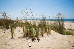 Diuny przy plażą Zdjęcie Stock