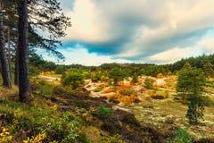 Diuny rezerwa w jesieni w Schoorl holandiach fotografia royalty free