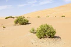 Diuny w Liwa oazie, UAE Fotografia Stock