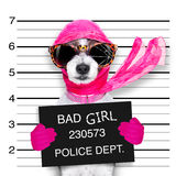 Diva chic dog Royalty Free Stock Image