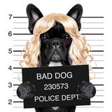 Diva chic mugshot Stock Images