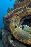 Dive Bali Stock Photos