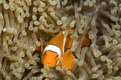 Dive Bali Royalty Free Stock Images