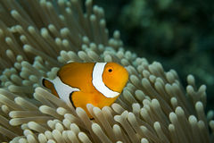 Dive Bali Stock Photo