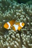 Dive Bali stock image