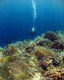 DIVE WITH BEAUTIFUL CORALS. At Bunaken Island Indonesia stock image
