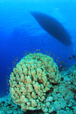 Dive Boat and Coral Reef Stock Photography