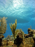 Dive boat and reef. The silhouette of a dive boat can be seen above the reef through the clear water Stock Image