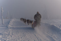 Dive into the clouds and fog. International dogsled race Sedivace's long in Orlicke Hill. Traditional sleddog race in Czech Republic. Sedivacek's long sleddog Stock Photo