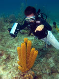 Dive Master Pointing At A Sea Sponge Royalty Free Stock Photos
