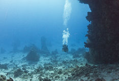 In dive site Umm hararim Royalty Free Stock Photos