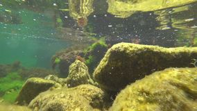 The underwater world of the black sea with fish stock video footage