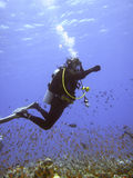 Diver. Women diver within school of fish royalty free stock photo