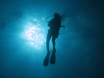 Diver 102 Royalty Free Stock Image