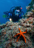 Diver. Scuba diver with red starfish in front Royalty Free Stock Photos