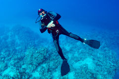 Diver. In the background of the reef royalty free stock photography
