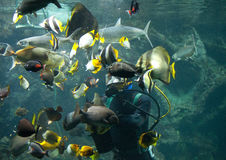 Diver Royalty Free Stock Images