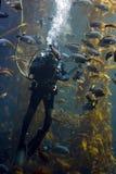 Diver Stock Photos