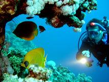 Diver. And butterflyfish in Red sea Royalty Free Stock Photos