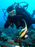 Diver. And fish, Red sea Royalty Free Stock Image