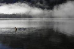 The diver in Alpine lake Stock Photo
