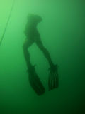 Diver appearing Stock Images