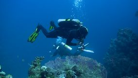 Diver with aqualung and camera swimming underwater near the coral reef. 4K. Diver with aqualung and camera swimming underwater near the coral reef. Red sea Egypt stock video footage