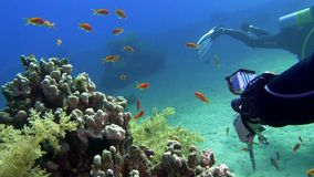 Diver with aqualung and camera swimming underwater near the coral reef. 4K. Diver with aqualung and camera swimming underwater near the coral reef. Red sea Egypt stock footage