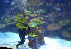 Diver in aquarium Stock Images