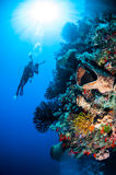 Diver, barrel sponge, feather stars, black sun coral in Banda, Indonesia underwater photo Stock Photo
