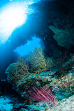 Diver, barrel sponge, feather stars, black sun corarls in Banda, Indonesia underwater photo Stock Images
