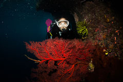 Diver with big seafan Stock Images