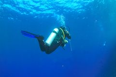 Diver in blue water royalty free stock photography