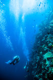 Diver blue water scuba diving bunaken indonesia sea reef ocean Royalty Free Stock Photography
