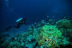 Diver blue water scuba diving bunaken indonesia sea reef ocean Stock Photos