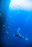 Diver blue water scuba diving bunaken indonesia sea reef ocean Stock Photography
