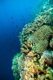 Diver blue water scuba diving bunaken indonesia sea reef ocean Royalty Free Stock Photography