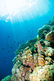 Diver blue water scuba diving bunaken indonesia sea reef ocean. Underwater stock photography