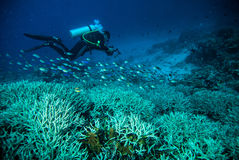 Diver blue water scuba diving bunaken indonesia sea reef ocean. Underwater Stock Images