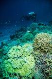 Diver blue water scuba diving bunaken indonesia sea reef ocean Stock Photo