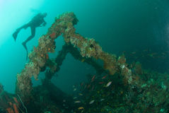 Diver, boat wreck in Ambon, Maluku, Indonesia underwater photo Stock Images