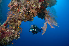 Diver with camera along the reef, Red Sea Royalty Free Stock Image