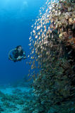 Diver with camera along the reef, Red Sea Royalty Free Stock Images