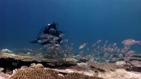 Diver with camera takes photos school of fish underwater Acropora in Maldives.