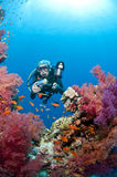Diver with camera, underwater photo, Red Sea Royalty Free Stock Images