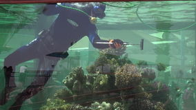 Diver clean aquarium in Coral World Underwater Observatory aquarium in Eilat Israel stock video