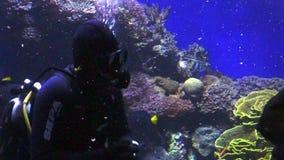Diver clean aquarium in Coral World Underwater Observatory aquarium in Eilat Israel. EILAT, ISR - APRIL 16 2015:Diver clean aquarium in Coral World Underwater stock footage
