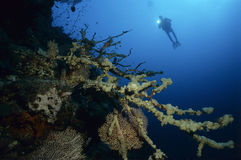 Diver with colorful corals Royalty Free Stock Photography